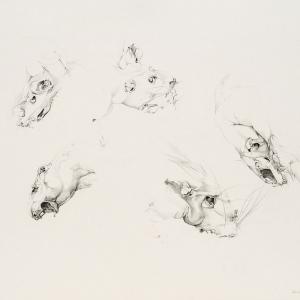 Ulrike Waninger - Rattenstudie
