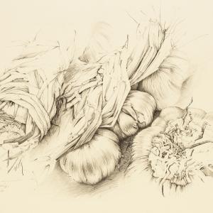 U. Waninger - Knoblauch
